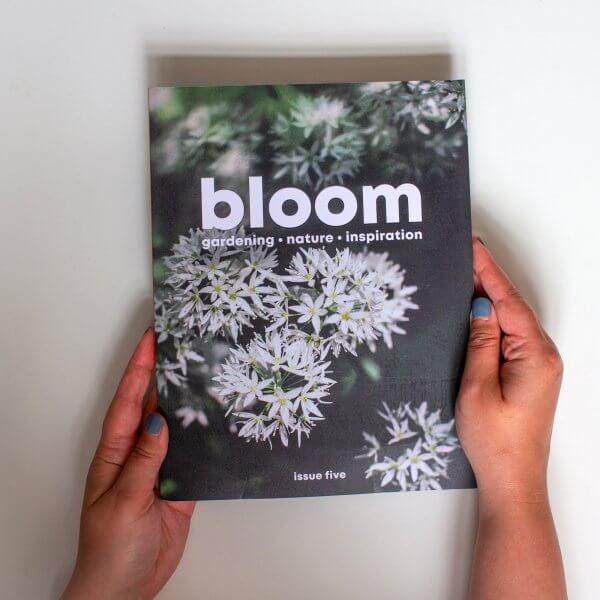 Bloom - issue 5